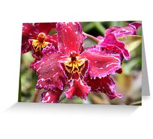 Magenta & Yellow Orchid Greeting Card