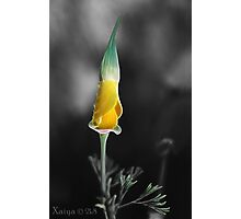 yellow and green Photographic Print