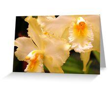 Cream & Yellow Orchids (cattleya) Greeting Card