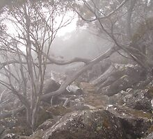 Mt Wellington Fog by Marc Bester
