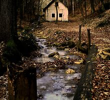 Little house in the wood by Mojca Savicki