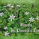 HAPPY ST PATRICK'S DAY - Star of Bethlehem Wildflowers by MotherNature