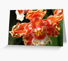 Orange & White Orchid  Greeting Card