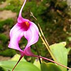 Little Pink Orchid (masdevallia) by Laurel Talabere
