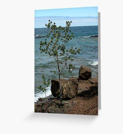 Superior tree Greeting Card