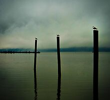 Three Seagulls - Peekskill Riverfront  by JHRphotoART