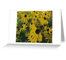 Beautiful Black-Eyed Susan Flowers Greeting Card
