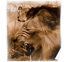 Lions on the Hunt - Photo Painting Poster