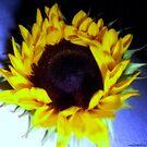 Sunflower 2 by saseoche