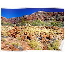 Living Desert, 10 November 2008 Poster