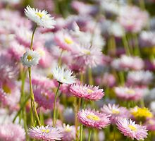 floral affair by Ian Robertson