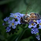 ....honey to the bee.... by gamaree L