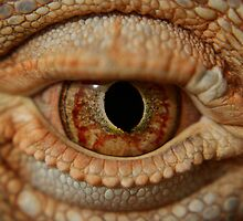 lizard eye by Travis Seale