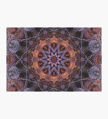 Concentric Sage Photographic Print