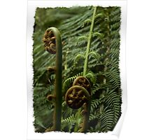 Fern Fronds Poster