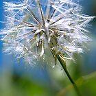 Make a wish by gamaree L