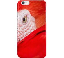 Macaw up close and personal iPhone Case/Skin