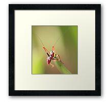Anti Ant Framed Print