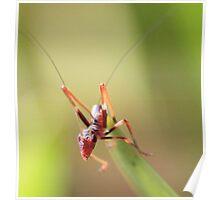 Anti Ant Poster
