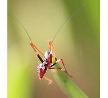 Anti Ant Photographic Print