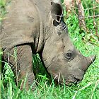 UP CLOSE THE BABY RHINO - White Rhinoceros - Ceratotherium simum  -  WIT RENOSTER by Magaret Meintjes