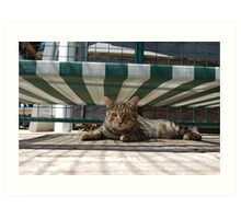 Tiger in charge of the dog bed.  Art Print