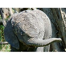 AFTER A MUD BATH, THE BABY ELEPHANT  - THE AFRICAN ELEPHANT – Loxodonta Africana Photographic Print