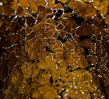Cracks by forestglade