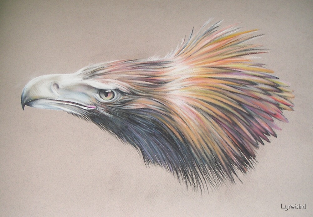 Wedge Tailed Eagle Pastels by Lyrebird