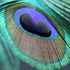 Peacock Feather by caffeinepowered