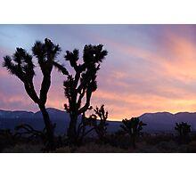 Desert Silhouette Photographic Print