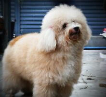 A Puppy Named Nam Tan by smile4me