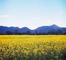 The Grampians by Lea Williams