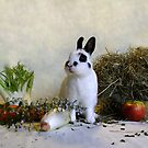 Rabbit Paradise by Sanne van Splunter