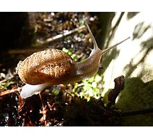 Mr(and Mrs) Snail Photographic Print