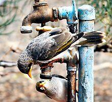 Thirsty birds by Dóra  Varga Lencsés