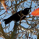 Crow in tree by sparrowdk