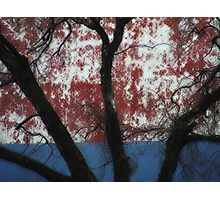 Tree with backdrop Photographic Print