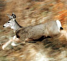 Leaping Mule Deer by Ryan Houston