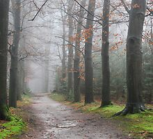 Walking in the misty December forest by jchanders