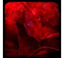 Ttv: Dirty Red Rose Photographic Print
