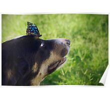 Toby's Butterfly Poster