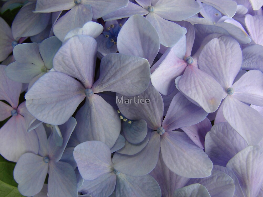 Purple Hydrangea Bunch by Martice