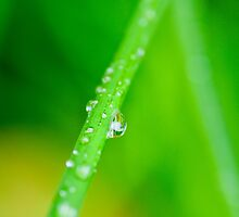 Droplets on grass by Norman Repacholi