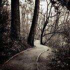 the path home by Jean Poulton