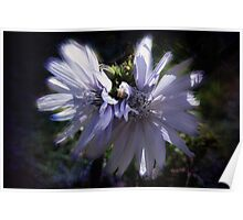 Chicory Flowers Poster
