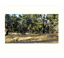 The Typical Wimmera Scrub Art Print