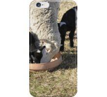 Sheep. iPhone Case/Skin