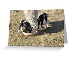 Sheep. Greeting Card