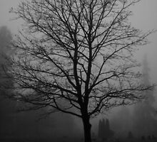 Fog by PorcelainPoet